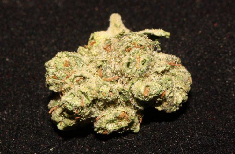 Gupta Kush (marijuana review)