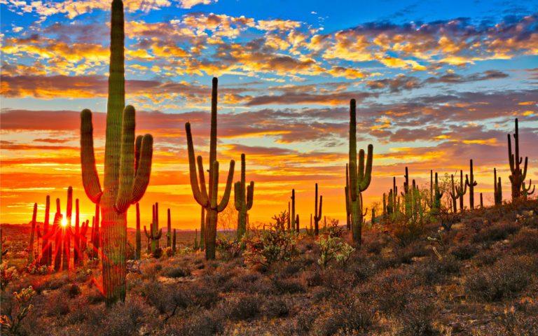 "The Battle for Arizona: ""The Roll-Up"" Bonus Episode"